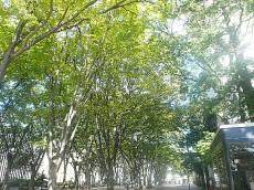 パシフィック馬事公苑前