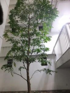 インペリアル渋谷神泉フラット 中庭