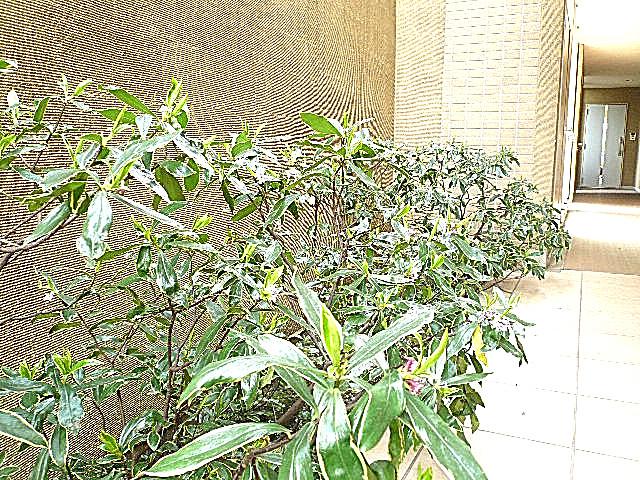 ホームズ緑が丘 共用部廊下