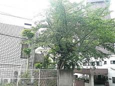 マンション第二恵比須苑 5階からの眺望514