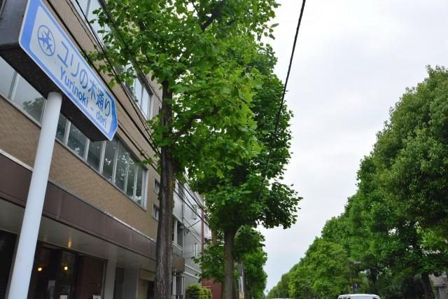 東高PAIR CITY ユリの木通り