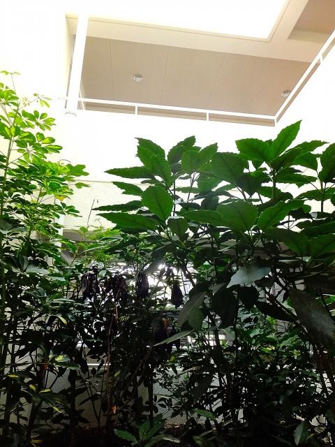 パレス池田山 洋室7.5帖窓から景色203