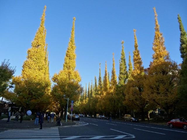 ジェントルエア神宮前 外苑前銀杏並木
