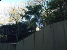 パレ駒場 洋室約8.3帖バルコニー眺望