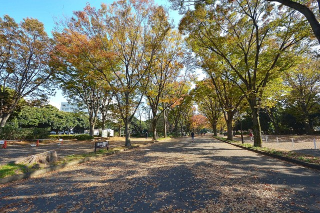 ルーブル駒沢大学Ⅱ 駒沢公園