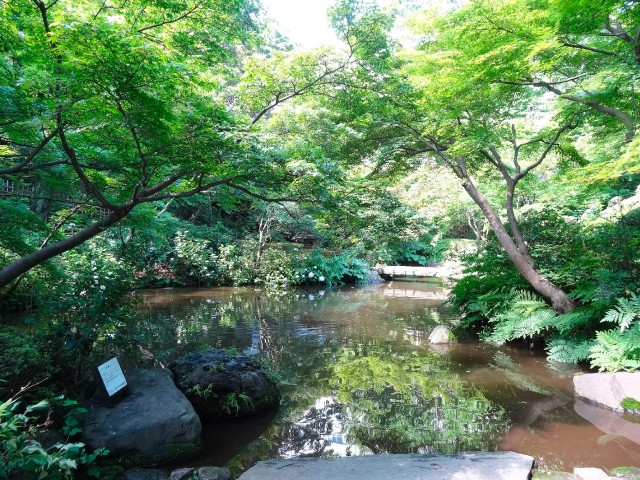 シャトレー五反田 池田山公園
