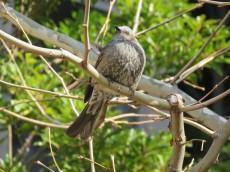 パークコート赤坂ザタワー 木にとまる鳥