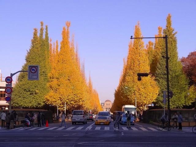 フォンテ青山 銀杏並木
