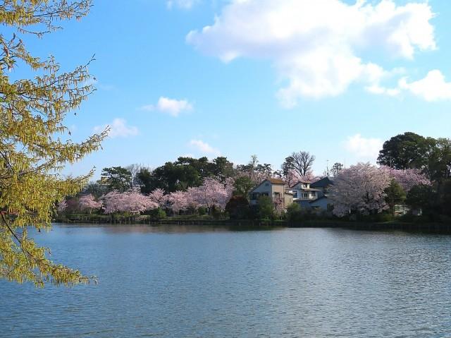 朝日石川台マンション 洗足池
