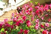 松濤マンション エントランス脇の植栽
