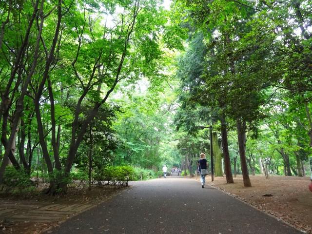 ビリジアン学芸大学 林試の森公園
