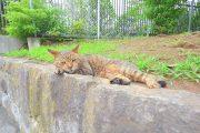 南砂町 (12)公園のネコ