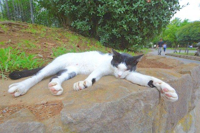 南砂町公園のネコ
