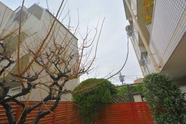 渋谷本町オリエントコートⅡ バルコニー・庭