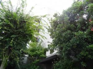 エコロジー落合レジデンスⅡ植栽