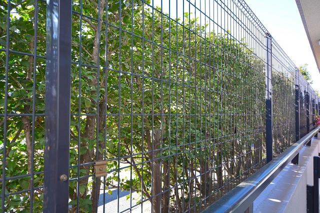 植栽で外からの視界を遮ってます