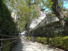ベルメゾン池田山 五反田公園の桜並木