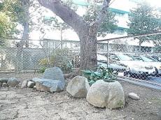 弦巻リハイム 緑ある専用庭