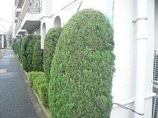 豊栄平町マンション 緑に囲まれ