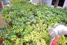 アルファニッシュ白金高輪 植栽