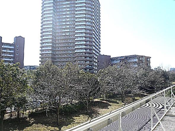 多摩川芙蓉ハイツ 2階からの眺望