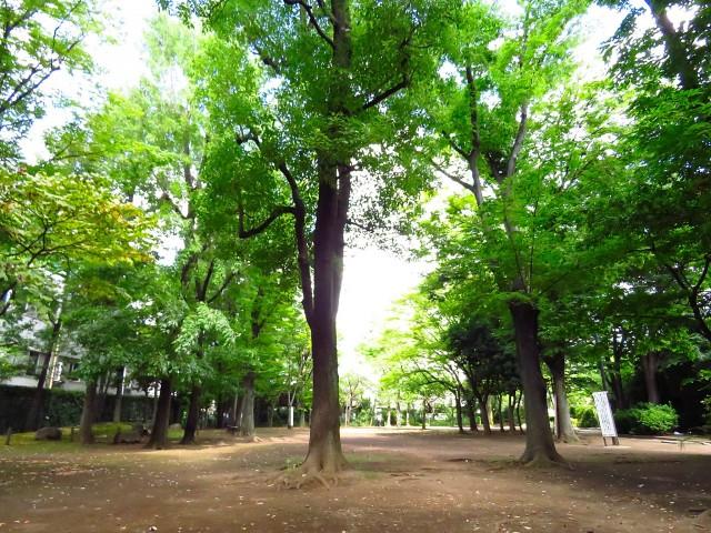 東建マンション学芸大 中央緑地公園