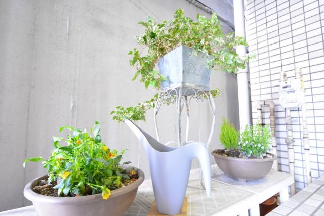 サンセール広尾 エントランス植物