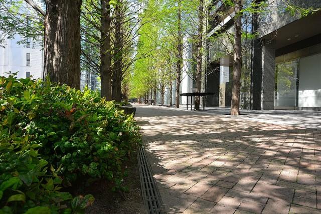 東京レジデンス 遊歩道