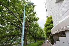 クレッセント中目黒 桜並木