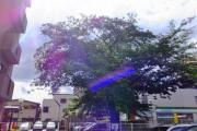 芦花公園パークホームズ 駐車場桜