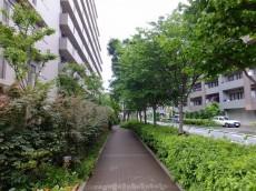芦花公園パークホームズ 遊歩道