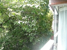 ノア南麻布 2階からの眺望