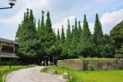 スカイプラザ赤坂 外苑前銀杏並木