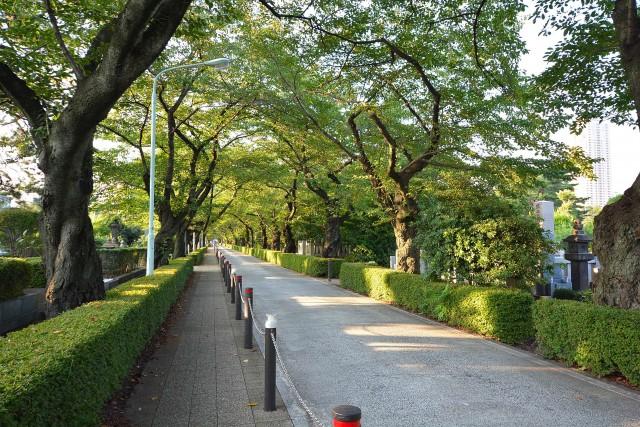 ライオンズマンション乃木坂 青山霊園