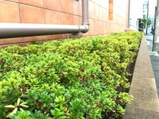 代々木ハビテーション 植栽