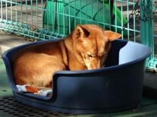 卓巳コーポ 碑文谷公園の犬