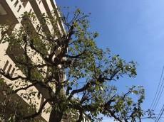 ウィライブ下落合 植栽