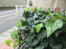 トーア高輪ガーデン エントランス