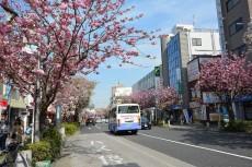 ライオンズマンション弦巻 桜新町商店街