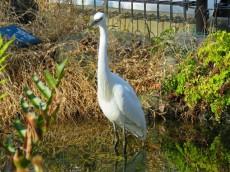 世田谷三宿サンハイツ 緑道にいた鳥