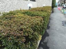 サンコート西荻窪 植栽