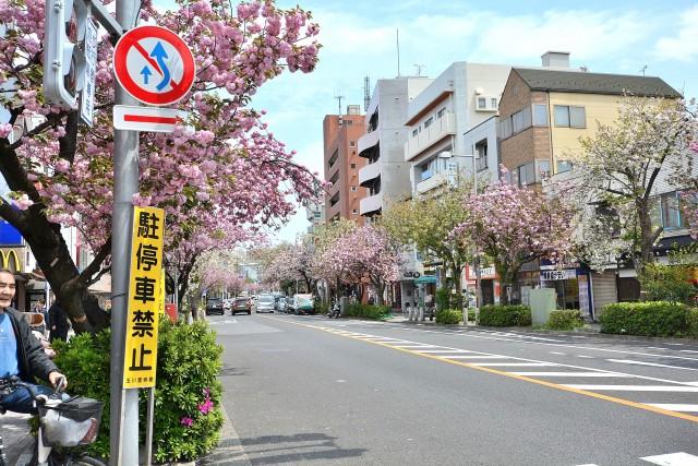 コスモス深沢 駅前通り