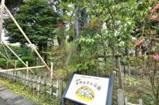 コスモス深沢 サザエさん公園