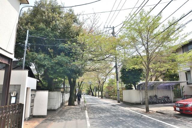 コスモス深沢 街路樹