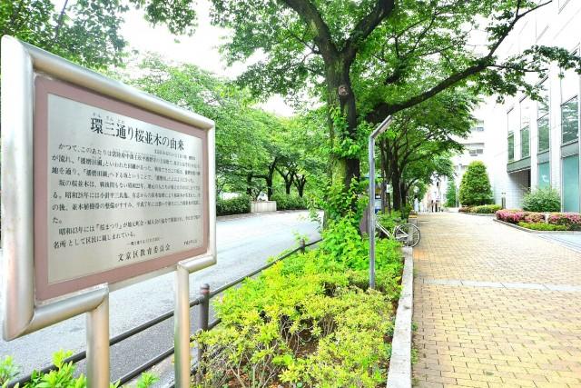 マンション小石川 播磨坂さくら並木沿い