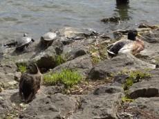 ライオンズプラザ石川台 洗足池