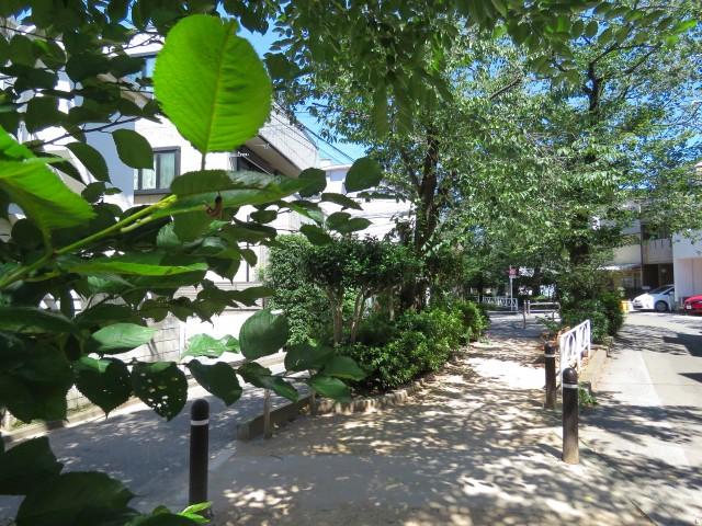 自由ヶ丘第七コーポ 緑道