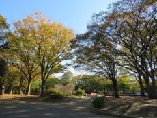 駒沢コーポラス 駒沢オリンピック公園
