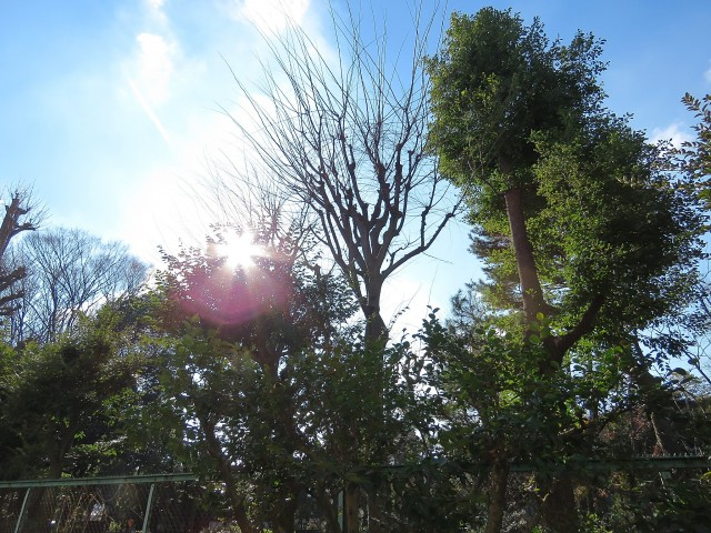駒沢ガーデンハイツ 眺望