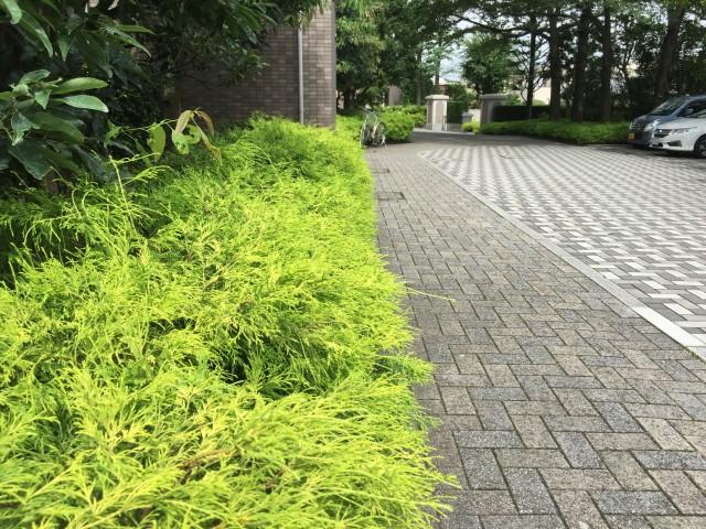 桜丘フラット 敷地内